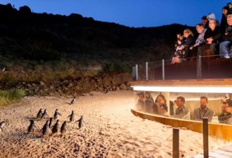http://www.visitphillipisland.com/listing/penguin-parade/